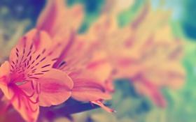 Обои цветок, листья, макро, пестик