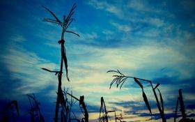 Обои картинка. цвета, трава, фото, тень, вечер, природа, растения