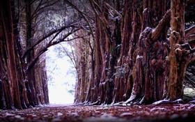 Обои зима, деревья, природа, старые, алея