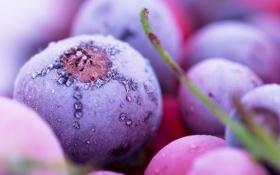 Обои ягоды, черника, мороз, иней, снег, лед, холод