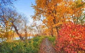 Картинка лес, осень, деревья, небо, река, тропинка