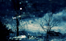 Обои природа, вечер, отражение, вода, деревья