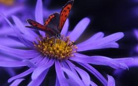 Обои цветок, сиреневый, фон, бабочка