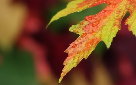 Обои капли, осень, Autumn, лист