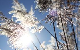 Обои трава, солнце, макро, природа, фото, рассвет, растения