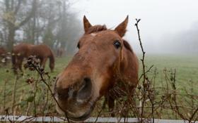 Картинка морда, забор, конь