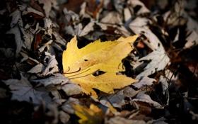 Картинка осень, листья, макро, природа, фото, осенние обои