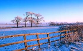 Картинка деревья, иней, зима, поле, снег, небо, забор