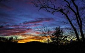 Картинка облака, деревья, зарево, силуэт, небо, вечер