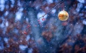 Картинка снег, ягоды, игрушка, шар, ветка, новогодняя