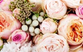 Обои розы, flowers, bouquet, roses