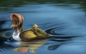 Обои вода, рябь, утёнок, чепчик, утка