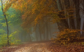 Картинка дорога, осень, лес, туман