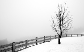 Картинка зима, дерево, забор