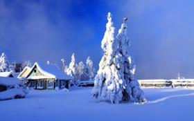 Обои зима, двор, дом