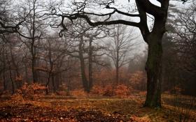 Картинка осень, деревья, туман, листва, trees, autumn, fog