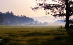 Обои природа, туман, роса, утро