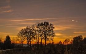 Картинка небо, облака, деревья, закат, вечер