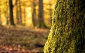 Обои мох, ствол, the tree, дерево