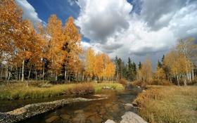 Обои осень, деревья, река