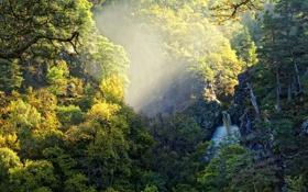 Картинка осень, лес, свет, природа, водопад