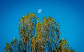 Обои осень, небо, листья, деревья, луна