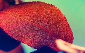 Картинка осень, природа, лист, красота, nature, autumn, macro
