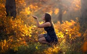 Картинка осень, лес, девушка, природа, солнечный свет