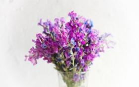 Картинка flowers, clover, Rusticity