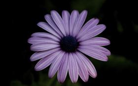 Картинка цветок, фон, сиреневый, лепестки