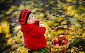 Обои листья, осень, яблоки, корзина, парк, ребёнок, взгляд