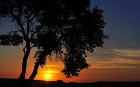 Обои закат, cantus, дерево
