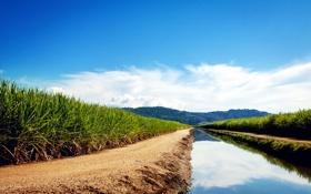 Картинка небо, вода, облака, гладь, отражение, река, пальмы