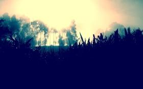 Обои трава, деревья, природа, туман, СОЛНЦЕ, СВЕТ