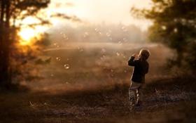 Обои nature, мыльные пузыри, sun day, деревья, ностальгия, природа, настроения