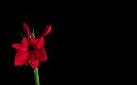 Картинка цветок, стебель, тень, фон, свет, лепестки