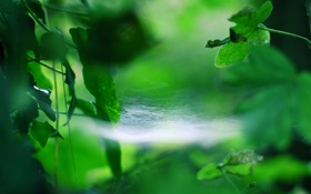Обои макро, листва, паутина
