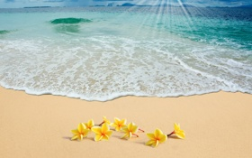 Обои plumeria, солнце, summer, море, sand, sea, песок