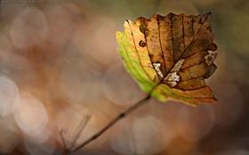 Обои осень, листья, макро, фото, листок, осенние обои