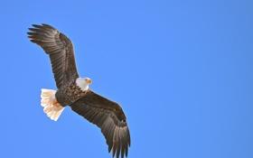 Обои белый, небо, глаз, птица, орел, крылья, хищник