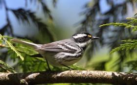 Картинка птица, ветка, хвост