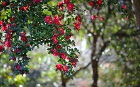 Картинка цветы, природа, дерево, боке