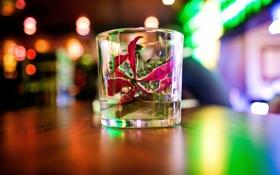 Картинка стакан, вода, боке, размытость, розовый, цветок, стекло
