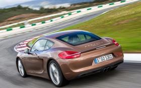 Обои обои, Porsche, Cayman, автомобиль, вид сзади, 2013