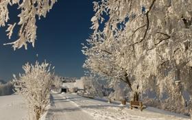Картинка зима, природа, снег, ветки, дорога