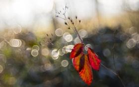 Картинка листья, блики, растение, ветка, семена