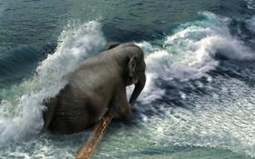 Картинка море, волна, слон, бревно