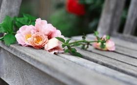 Картинка розы, скамья, цветы
