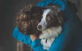 Картинка девушка, друг, собака