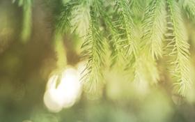 Картинка зелень, макро, деревья, иголки, ветки, иглы, дерево